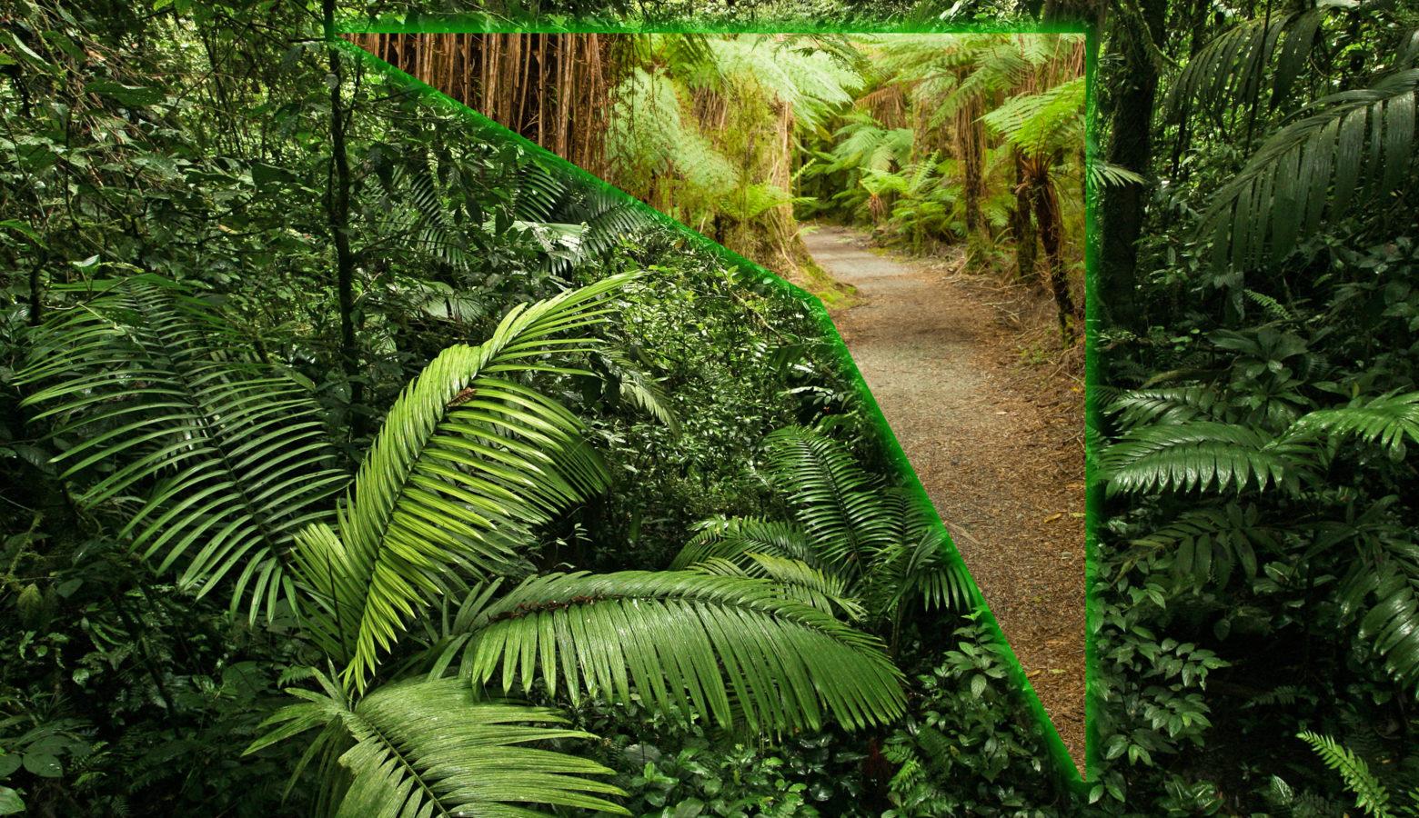 GPS navigiert Sie durch den Dschungel der Möglichkeiten