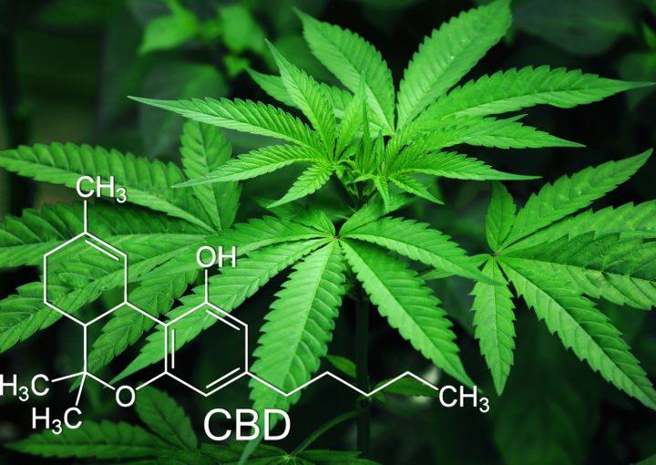 Medizinisches Cannabis CBD THC